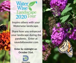 water wise landscaping announcement - dallas, tx